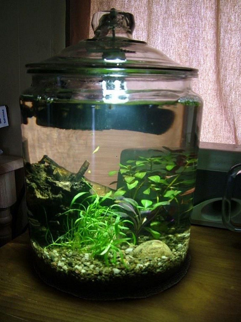 Awesome aquarium and fish pond ideas for your backyard for Awesome betta fish tanks