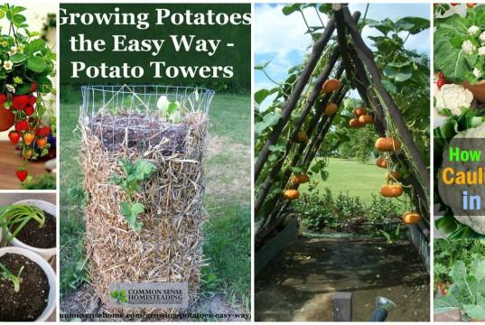 11-Smart-Ways-to-Grow-Veggies-and-Fruits-in-Your-Garden