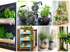 15 Amazing Ideas For Indoor Herb Garden