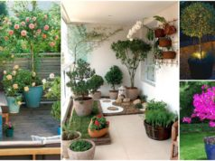 Outstanding Potted Trees that Will Beautify Your Outdoors
